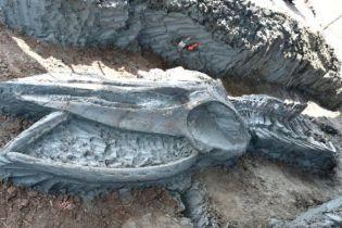 """""""Окно в прошлое"""": в Таиланде обнаружили уникальный огромный скелет кита"""