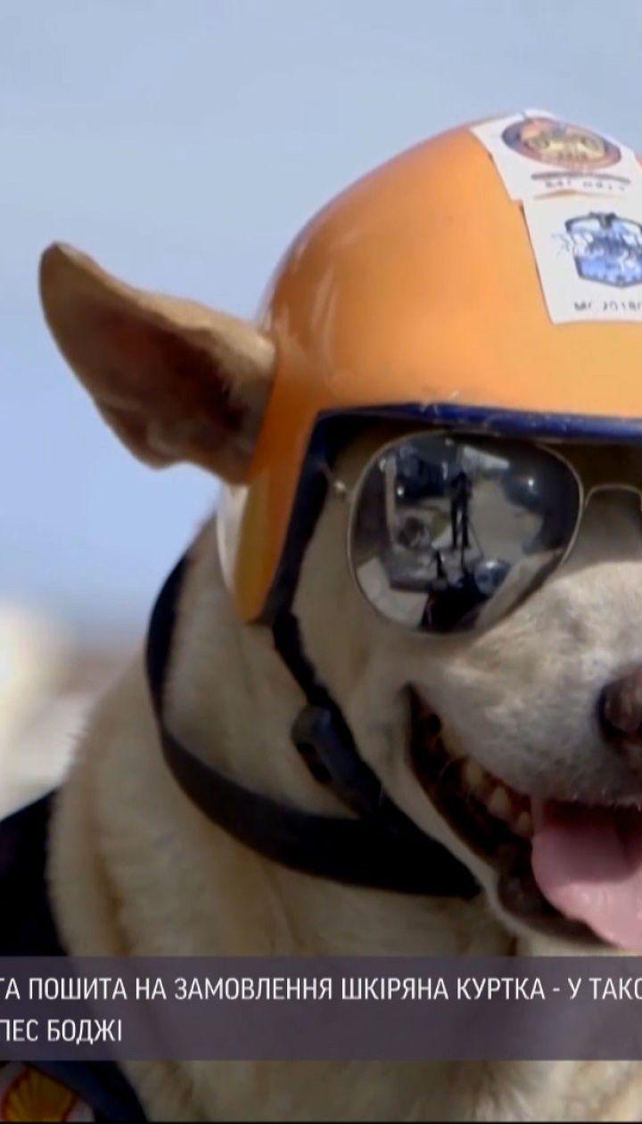 На Филиппинах популярным стал собака, который ездит на мотоцикле вместе со своим хозяином