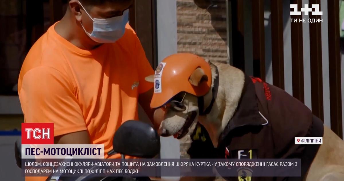 Собака-байкер из Филиппин покорила Сеть