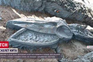 В Бангкоке обнаружили скелет кита возрастом в 3 тысячи лет