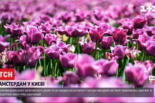 Уряд Нідерландів подарував українській столиці 100 тисяч тюльпанових цибулин