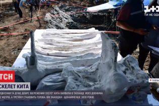 В Таиланде нашли 12-метровый скелет кита возрастом в 3 тысячи лет