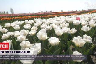 У центрі столиці висадили 100 тисяч тюльпанових цибулин
