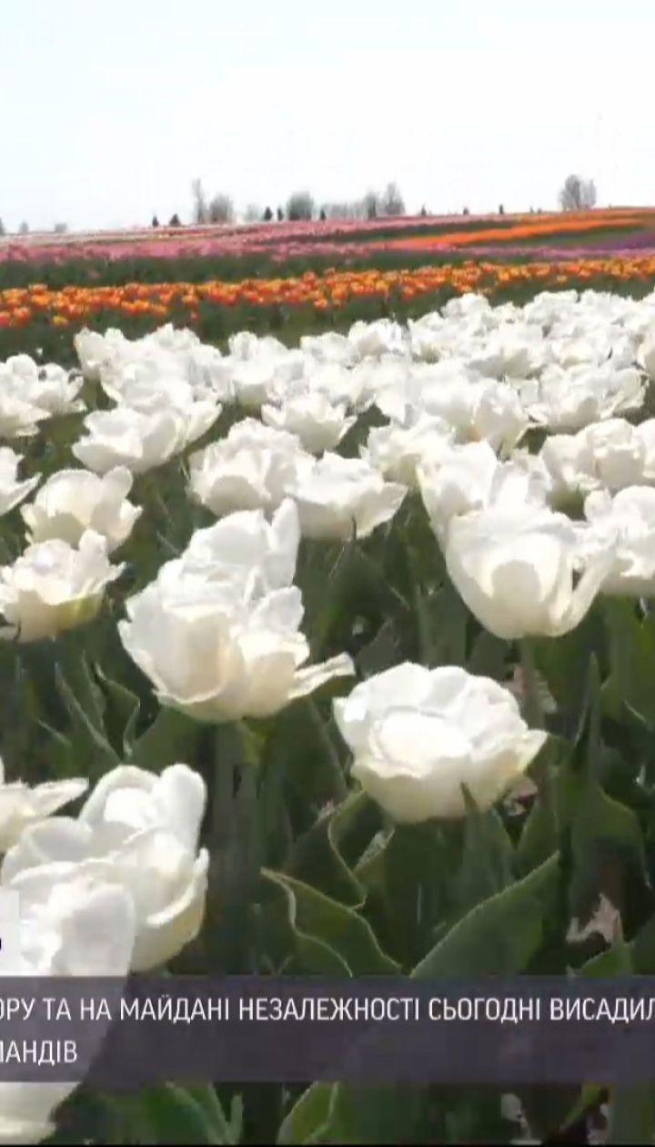 В центре столицы высадили 100 тысяч тюльпановых луковиц