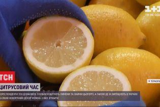 Кислий і ще кисліший: де в Україні лимони та лайми не вважають екзотичними фруктами