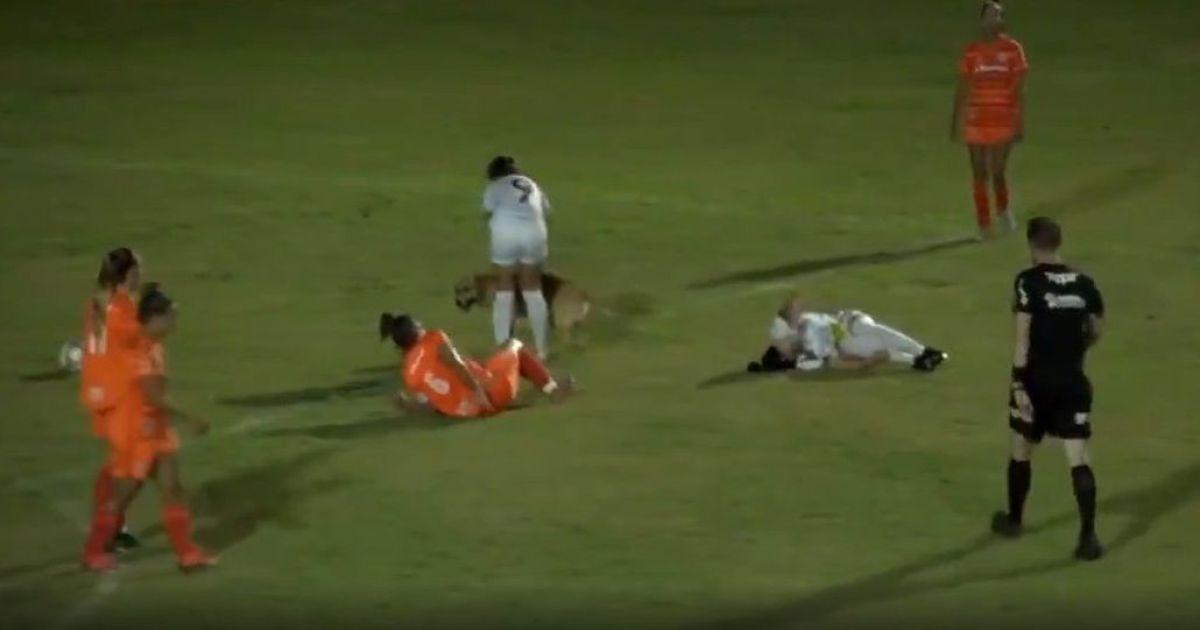 Сорвала матч и сбила футболистку: игривая собака выбежала на поле в Бразилии