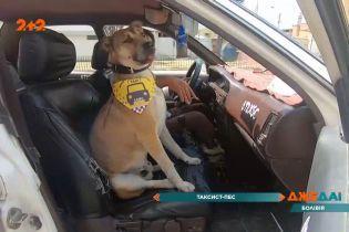 Найпозитивніше таксі в Болівії