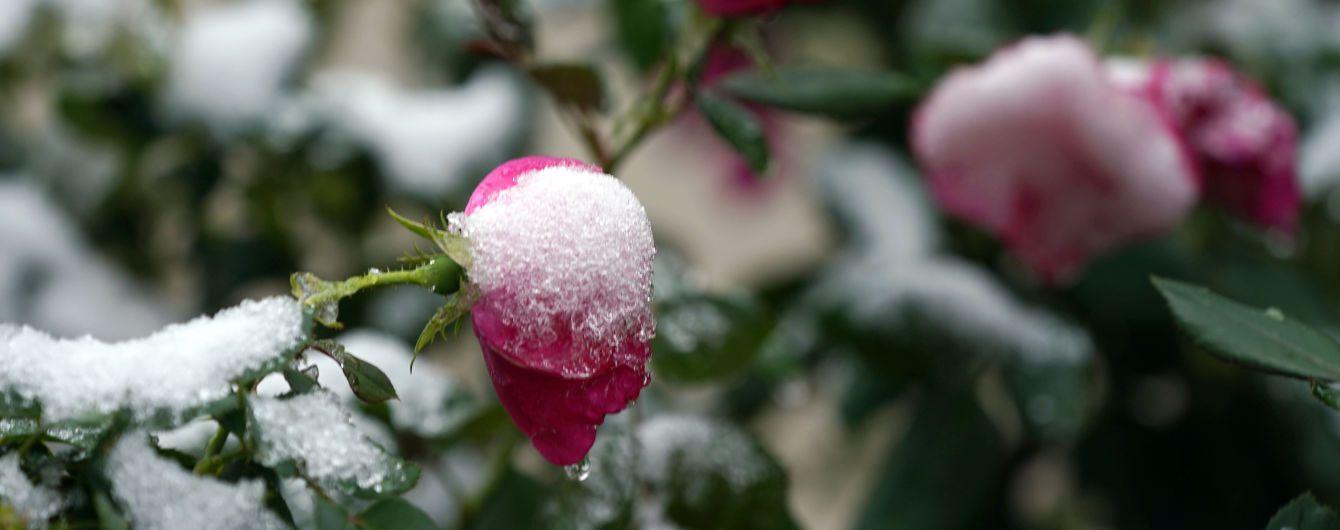 Прогноз погоды на 1 декабря: в Украину пришла непогода с мокрым снегом, дождем и порывистым ветром