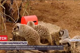 Сурикатам в Лондонском зоопарке сделали подарок - ящик с сушеными сверчками