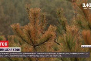 У фермеров из Черниговской области погорели сосны