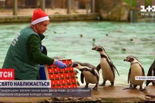 Напередодні Різдва у лондонському зоопарку пінгвінам презентували адвент-календар