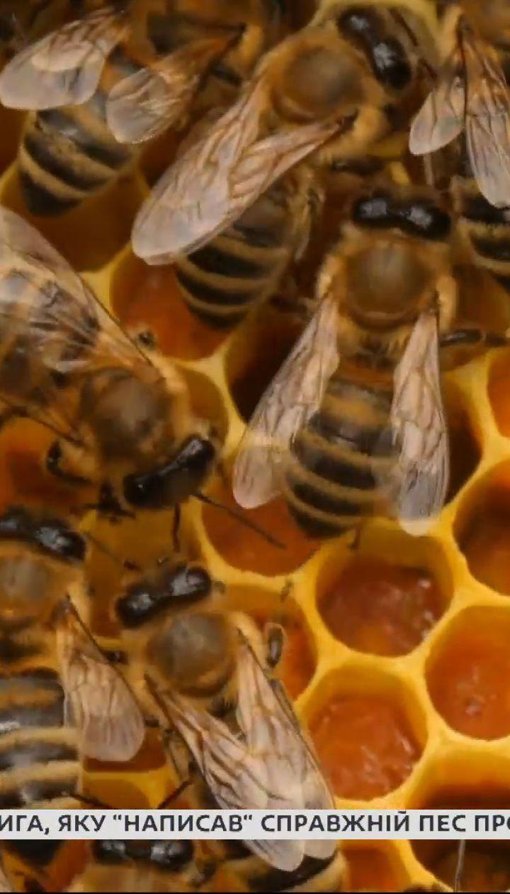 Україна стала лідером з експорту меду – Економічні новини