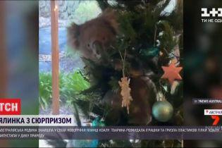 Коала странным образом попала в дом семьи из Австралии и принялась грызть ветки искусственной елки