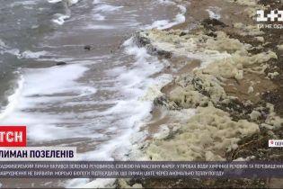 Хаджибейський лиман у передмісті Одеси, вкривсяневідомою речовиною, схожою на масляну фарбу