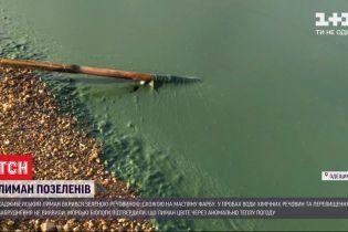 """Через аномально теплу погоду в передмісті Одеси """"зацвів"""" Хаджибейський лиман"""