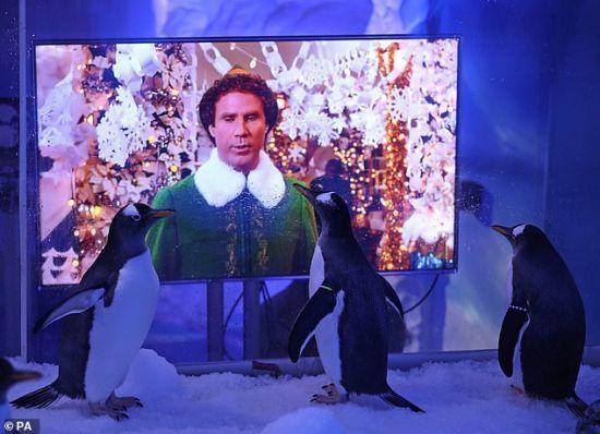 В акваріумі Лондона пінгвінам показують різдвяні фільми, щоб птахи не сумували без відвідувачів