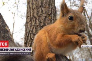 На лікування через білку: у Житомирській області чоловік врятував тварину, в якої був сказ