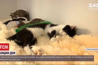 Подруги-волонтеры из Ивано-Франковска спасли 50 котят
