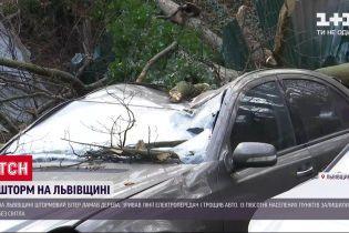 Штормовой ветер в Львовской области сорвал линии электропередач