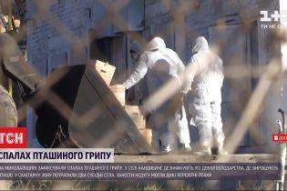 В Николаевской области из-за птичьего гриппа закрыли на карантин целое село