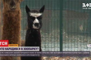 За рік у київському зоопарку народилося майже 90 тварин