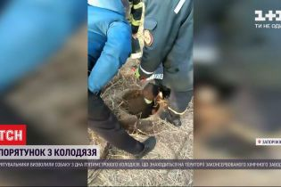 Запорізькі рятувальники дістали з колодязя безпритульного собаку