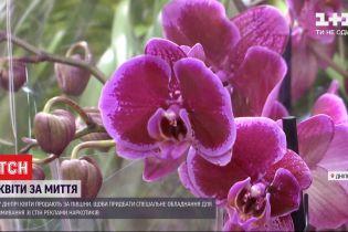 У Дніпрі продають квіти за пів ціни задля очищення фасадів від наркореклами