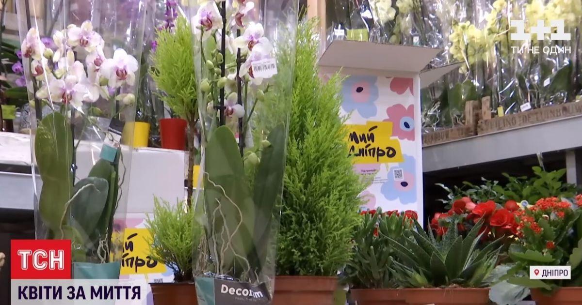 Самолет цветов из Нидерландов: в Днепре за полцены продают растения для борьбы с наркорекламой на фасадах