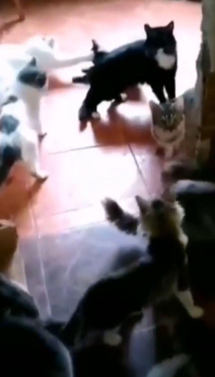 Четыре десятка кошек и три собаки: в Запорожье после смерти женщины осталась полная квартира четвероногих
