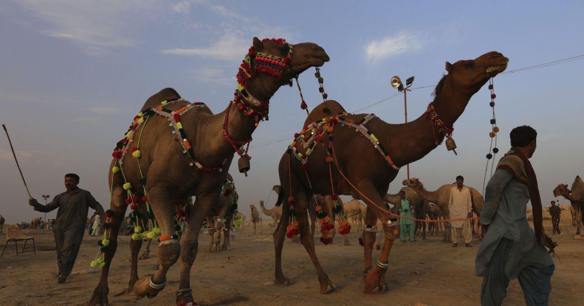 Кускус и верблюжьи бега: ЮНЕСКО обновила список культурного наследия