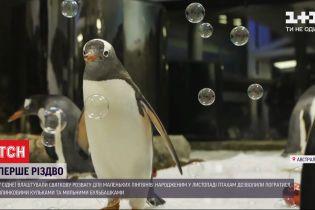 Святкування першого Різдва: маленьким пінгвінам у Сіднеї влаштували розваги з мильними кульками