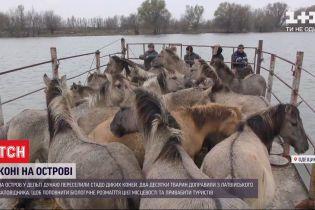 На пароме, через переправу: как доставляли диких лошадей из латвийского заповедника в дельте Дуная