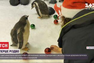 Сиднейским пингвинам устроили предновогодний праздник - у вольер насыпали разноцветные шарики