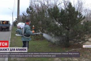 В Запорожье коммунальщики начали опрыскивать елки антивандальной смесью