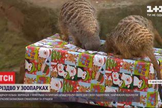Сразу несколько зверинцев в Германии и Британии устроили Рождество для животных