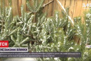 Чипов либо нет, либо фальшивые: в Украине фиксируют многочисленные нарушения легальной продажи елок
