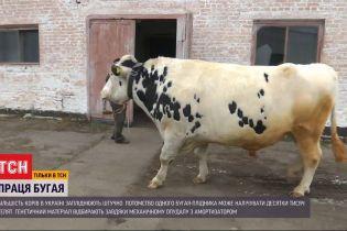 Судьба быков-осеменителей: как в Украине содержат этих племенных животных