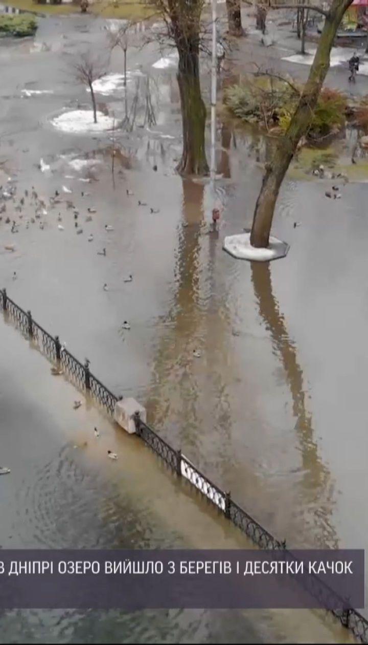 Утки на тротуарах: в Днепре озеро в городском детском парке вышло из берегов