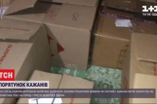 В Запорожье волонтеры спасли 700 летучих мышей