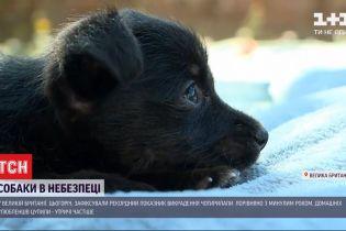В Великобритании зафиксировали рекордный показатель похищения собак