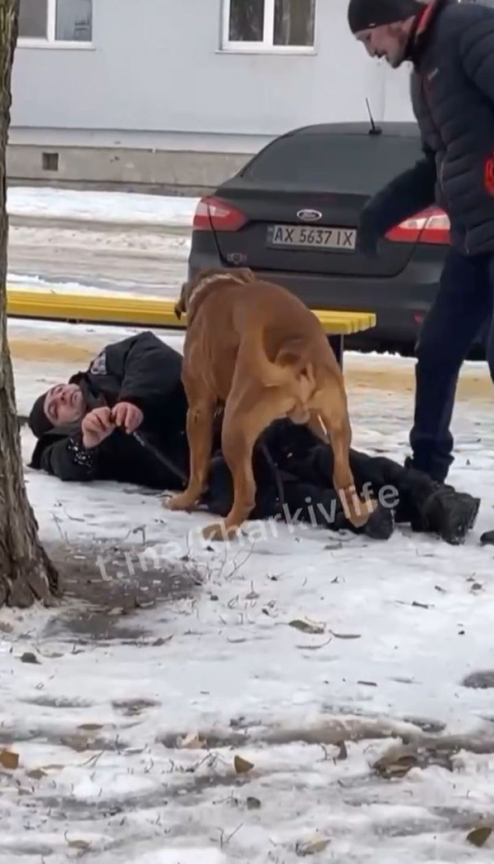 Щоб нічого не відморозив: у Харкові собака волочив додому свого п'яного господаря