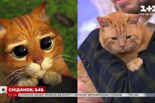 """Котик из """"Шрека"""" Шон ищет семью"""