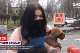 У Вінниці таксист побився з пасажирами через двомісячного цуцика