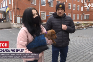 В Виннице из-за двухмесячного щенка таксист подрался с пассажирами