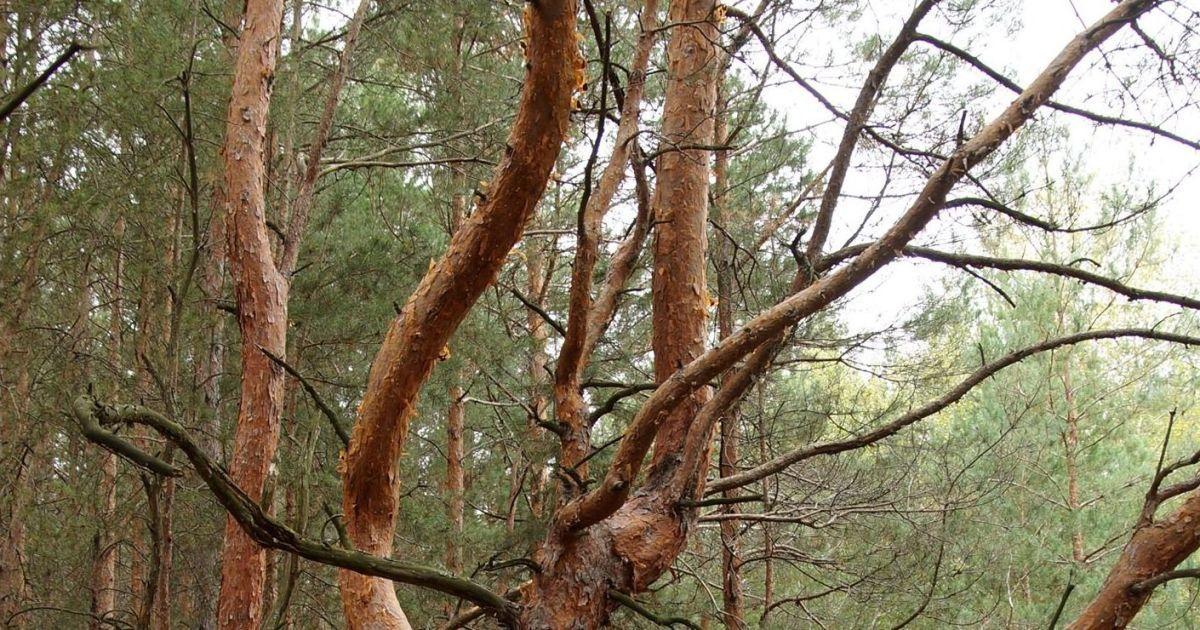 © Чорнобильський радіаційно-екологічний біосферний заповідник