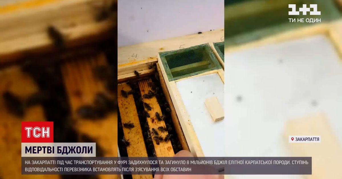 """Новини України: на Закарпатті загинуло 8 мільйонів бджіл від час транспортування """"Укрпоштою"""""""