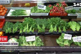 Зелень зимой: чем полезны салаты и сложно ли вырастить микрогрин собственноручно