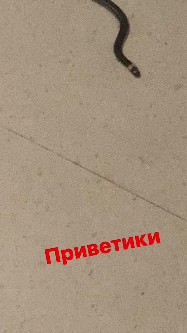 Надя Дорофеева, змія