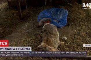 На Запорожье неизвестное существо уничтожает домашних животных