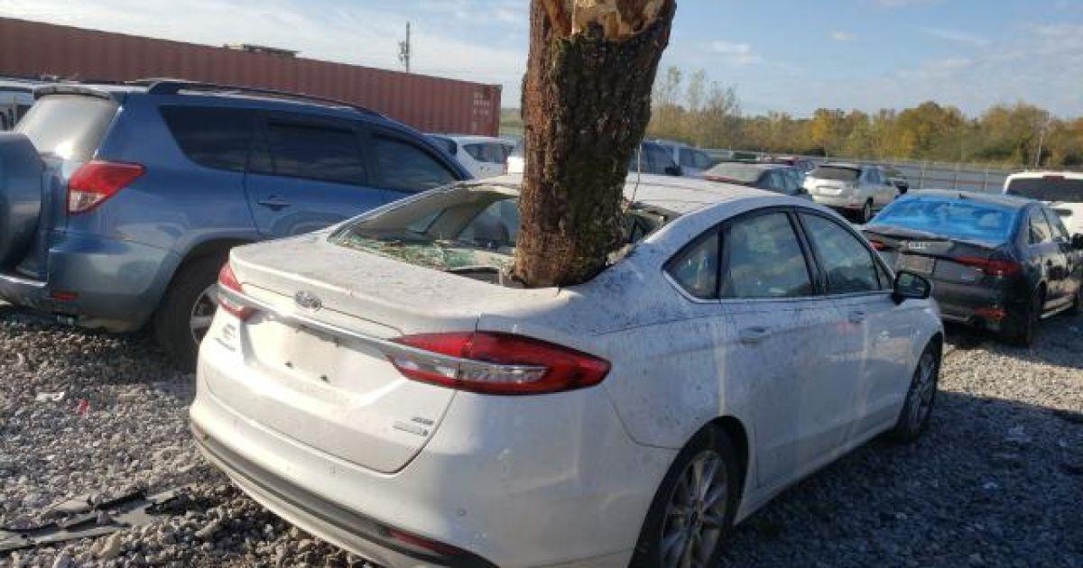 На відомому аукціоні продають Ford Fusion, із якого стирчить стовбур сосни